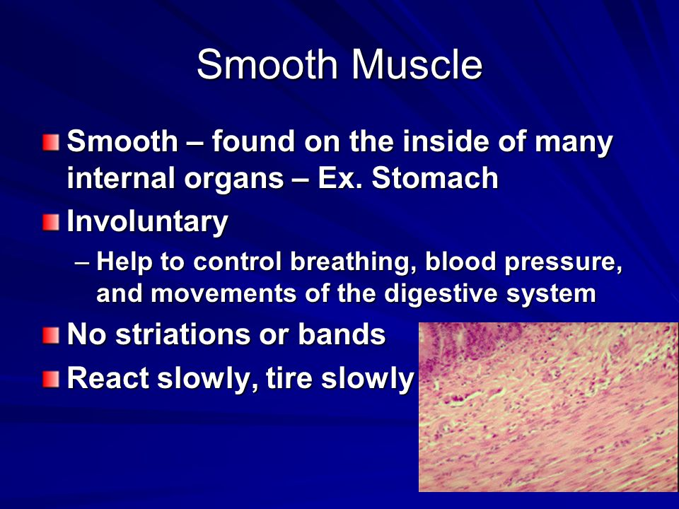 Smooth Muscle Smooth – found on the inside of many internal organs – Ex. Stomach Involuntary –Help to control breathing, blood pressure, and movements
