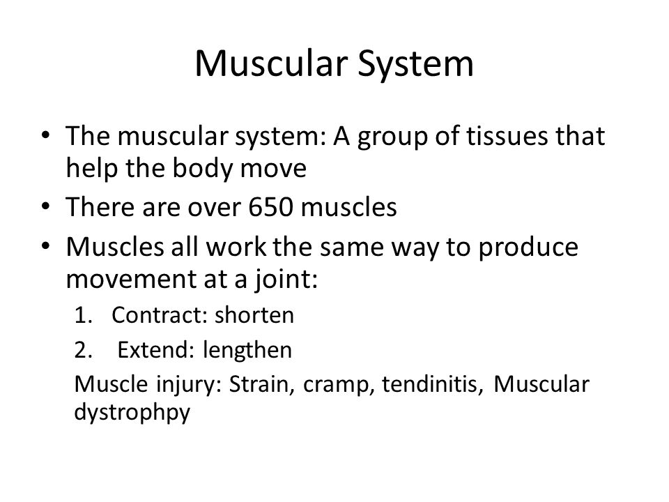 Types of Muscles 1.Smooth Muscles: Found in organs in the body such as stomach & intestines 2.Skeletal Muscles: Attach to bones and make up to 40% of body ( Bicep & Tricep) 3.Cardiac Muscle: Only found in heart, constantly contracts and relaxes, controlled by brain