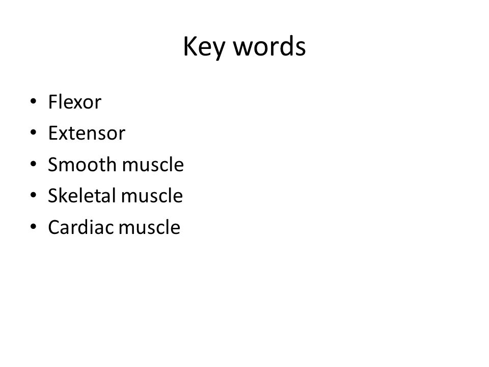 Key words Flexor Extensor Smooth muscle Skeletal muscle Cardiac muscle