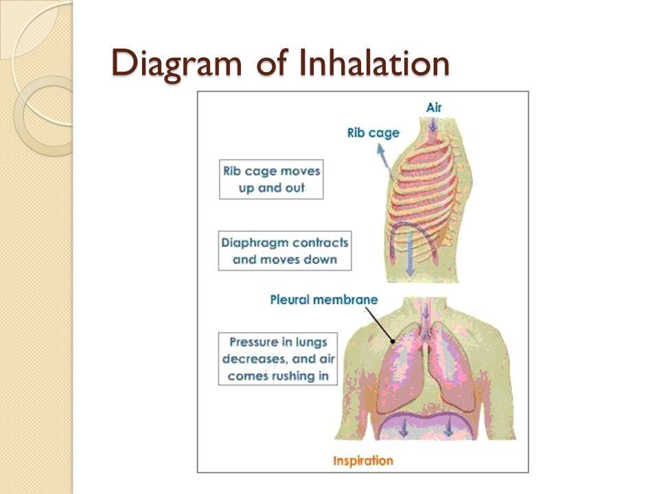 Diagram of Inhalation