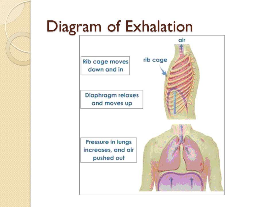 Diagram of Exhalation