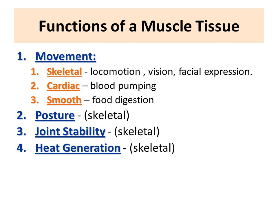 Functions of a Muscle Tissue 1.Movement: 1.Skeletal 1.Skeletal - locomotion, vision, facial expression.