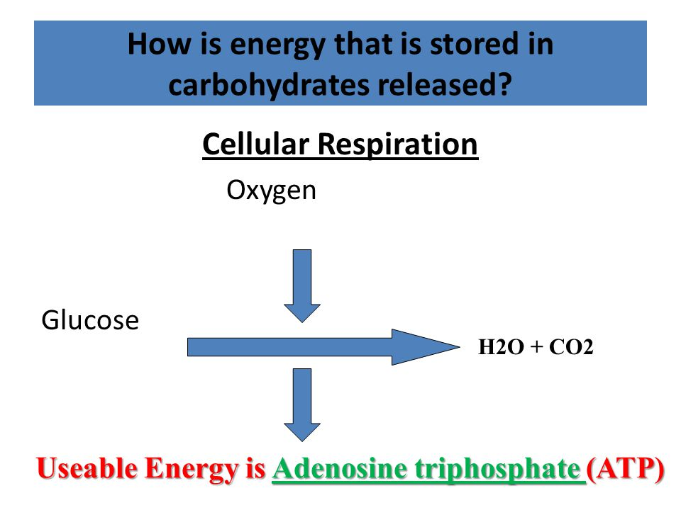How is energy that is stored in carbohydrates released.