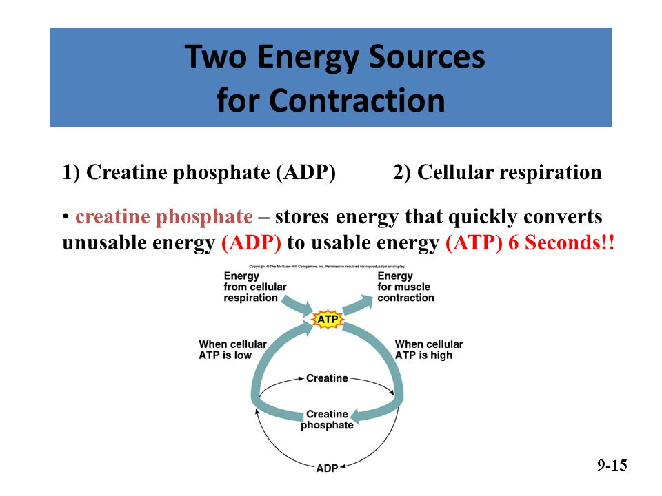 Two Energy Sources for Contraction 9-15 creatine phosphate – stores energy that quickly converts unusable energy (ADP) to usable energy (ATP) 6 Seconds!.
