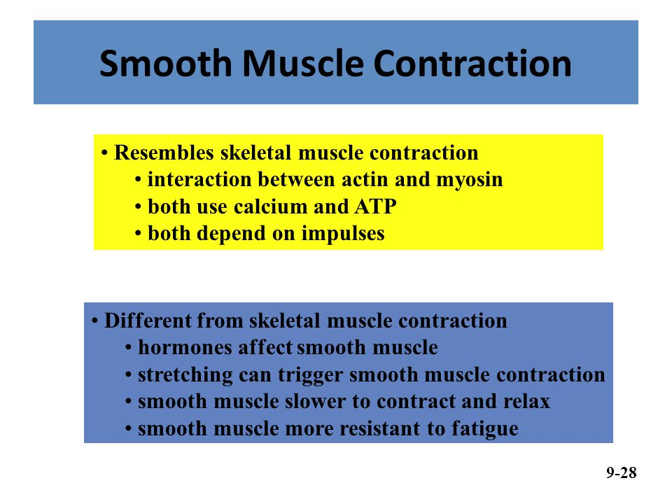 Smooth Muscle Contraction Resembles skeletal muscle contraction interaction between actin and myosin both use calcium and ATP both depend on impulses Different from skeletal muscle contraction hormones affect smooth muscle stretching can trigger smooth muscle contraction smooth muscle slower to contract and relax smooth muscle more resistant to fatigue 9-28