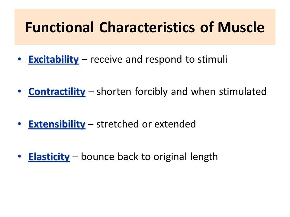 Functional Characteristics of Muscle Excitability Excitability – receive and respond to stimuli Contractility Contractility – shorten forcibly and when stimulated Extensibility Extensibility – stretched or extended Elasticity Elasticity – bounce back to original length