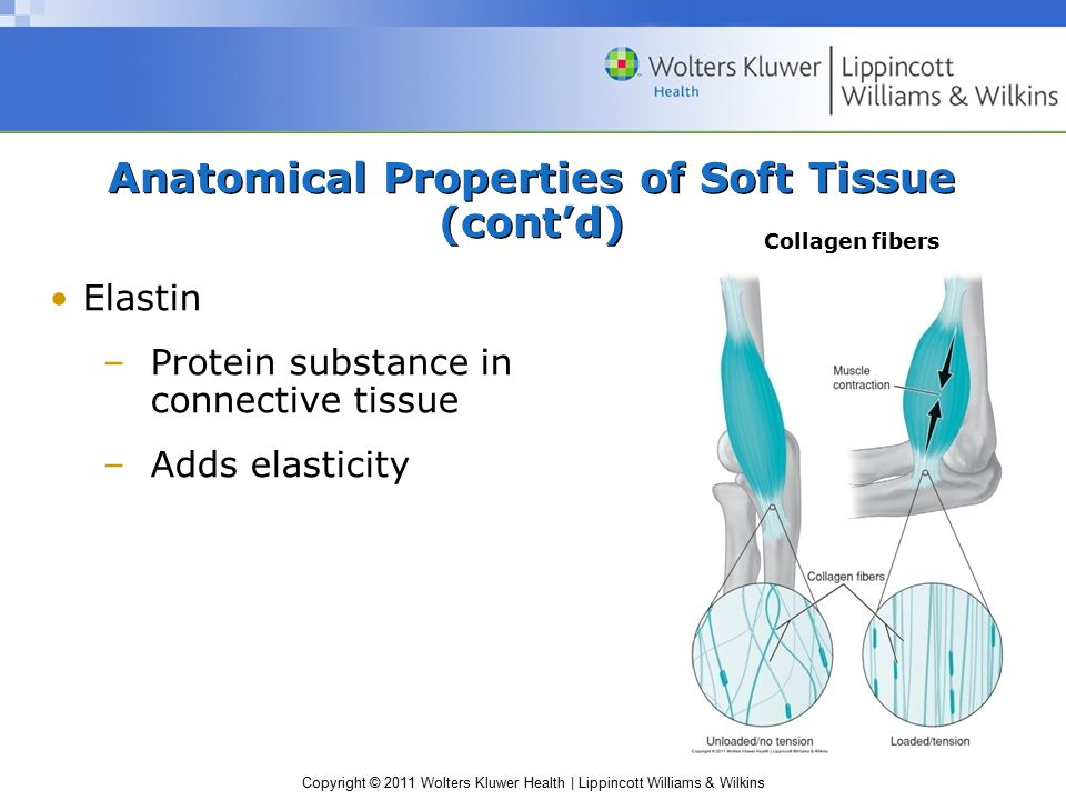 Copyright © 2011 Wolters Kluwer Health | Lippincott Williams & Wilkins Anatomical Properties of Soft Tissue (cont'd) Elastin –Protein substance in con