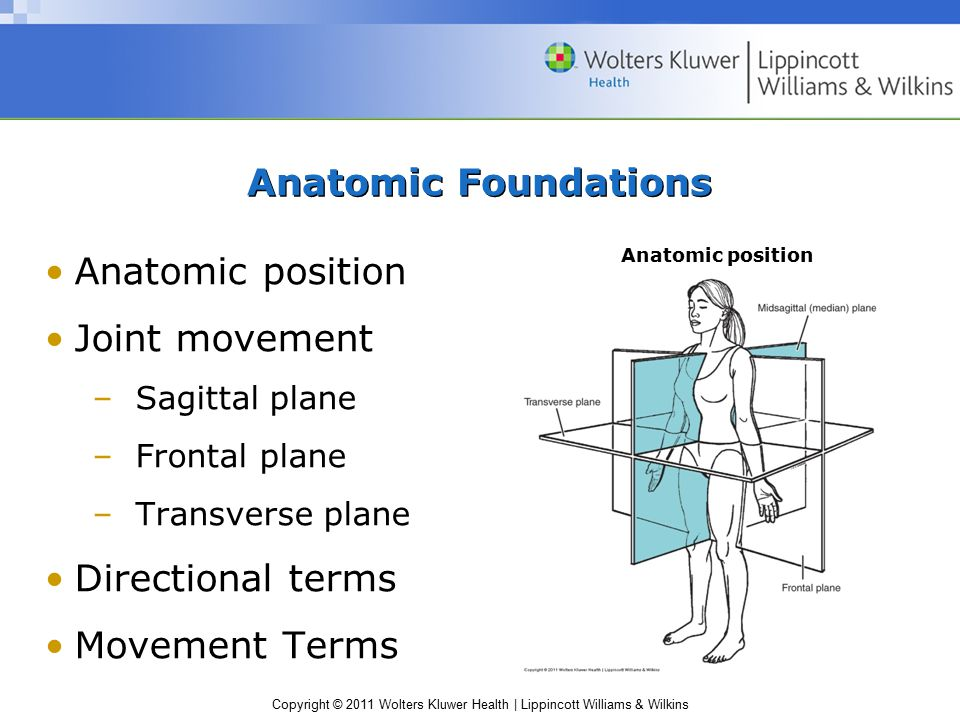 Copyright © 2011 Wolters Kluwer Health | Lippincott Williams & Wilkins Anatomic Foundations Anatomic position Joint movement –Sagittal plane –Frontal