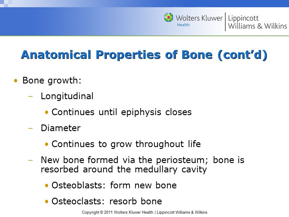 Copyright © 2011 Wolters Kluwer Health | Lippincott Williams & Wilkins Anatomical Properties of Bone (cont'd) Bone growth: –Longitudinal Continues unt
