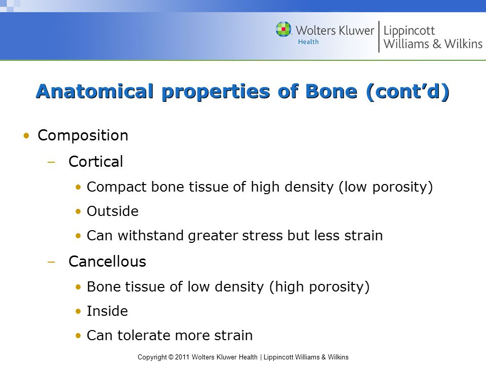 Copyright © 2011 Wolters Kluwer Health | Lippincott Williams & Wilkins Anatomical properties of Bone (cont'd) Composition –Cortical Compact bone tissu
