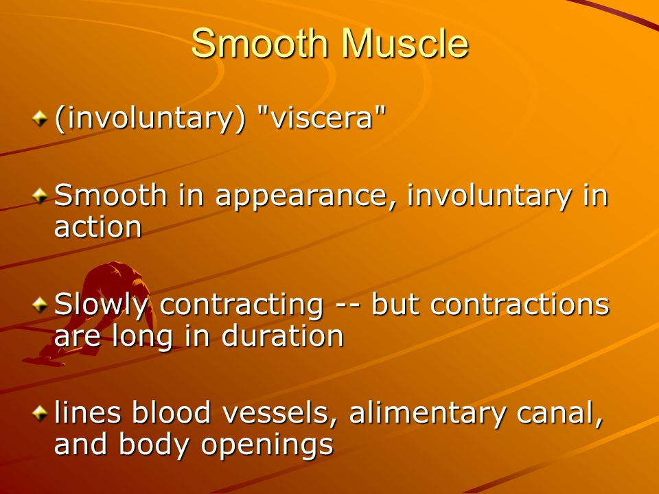 Smooth Muscle (involuntary) viscera Smooth in appearance, involuntary in action Slowly contracting -- but contractions are long in duration lines blood vessels, alimentary canal, and body openings