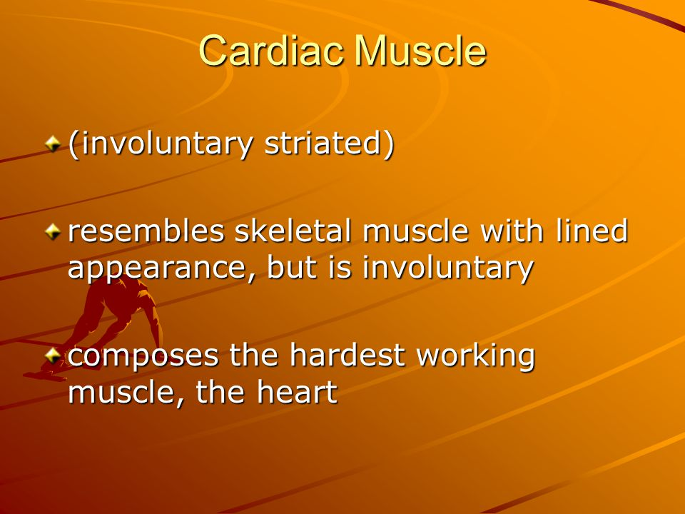 Cardiac Muscle (involuntary striated) resembles skeletal muscle with lined appearance, but is involuntary composes the hardest working muscle, the heart