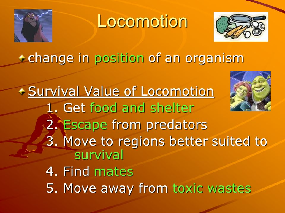 Locomotion change in position of an organism Survival Value of Locomotion 1.