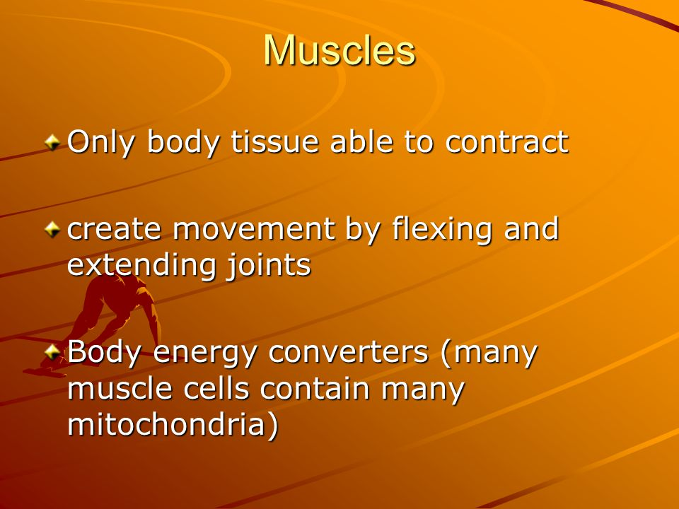 Muscles Only body tissue able to contract create movement by flexing and extending joints Body energy converters (many muscle cells contain many mitochondria)