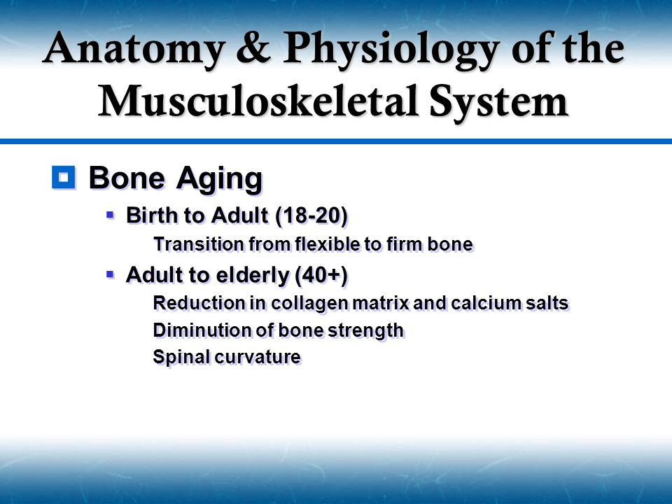  Bone Aging  Birth to Adult (18-20)  Transition from flexible to firm bone  Adult to elderly (40+)  Reduction in collagen matrix and calcium salts  Diminution of bone strength  Spinal curvature  Bone Aging  Birth to Adult (18-20)  Transition from flexible to firm bone  Adult to elderly (40+)  Reduction in collagen matrix and calcium salts  Diminution of bone strength  Spinal curvature Anatomy & Physiology of the Musculoskeletal System