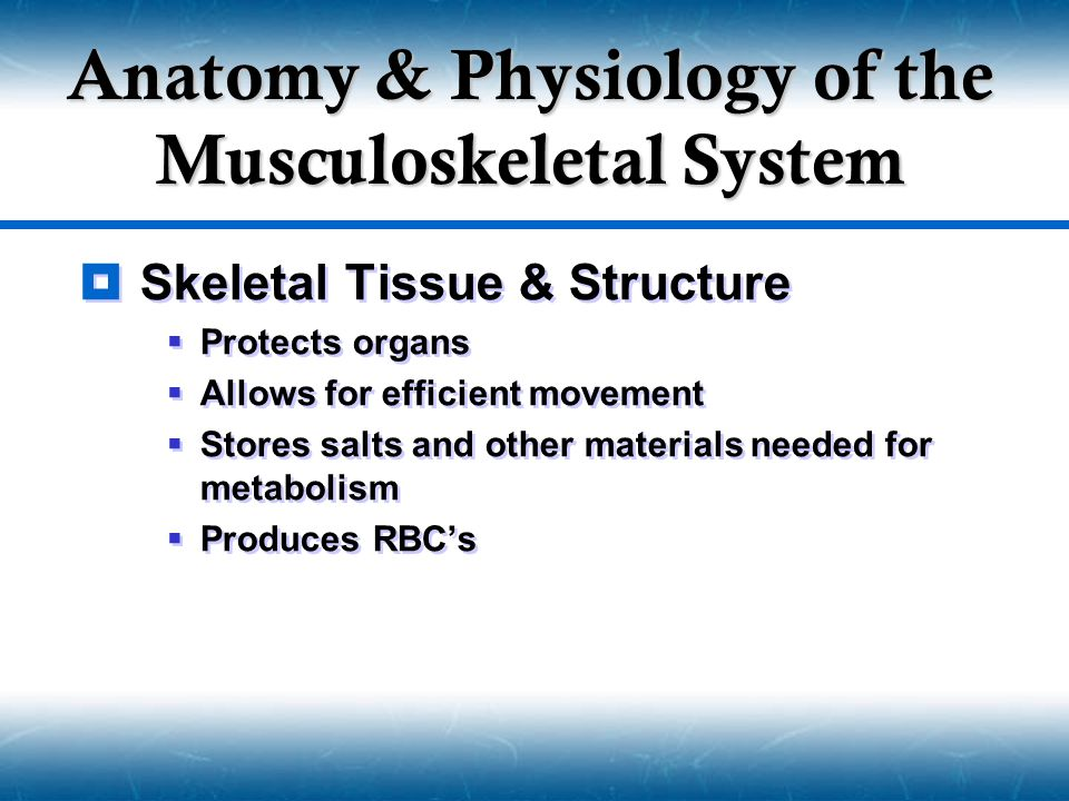 Musculoskeletal System  Bone Structure  Diaphysis  Epiphysis  End of a long bone  Metaphysis  Between epiphysis and diaphysis  Growth plate  Medullary Canal  Contains bone marrow  Periosteum  Fibrous covering of diaphysis  Cartilage  Connective tissue that provides a smooth articulation surface for other bones.