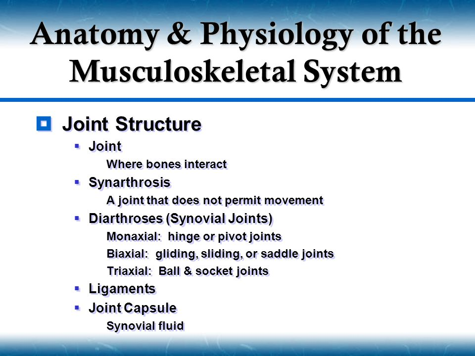 Joint Structure  Joint  Where bones interact  Synarthrosis  A joint that does not permit movement  Diarthroses (Synovial Joints)  Monaxial: hinge or pivot joints  Biaxial: gliding, sliding, or saddle joints  Triaxial: Ball & socket joints  Ligaments  Joint Capsule  Synovial fluid  Joint Structure  Joint  Where bones interact  Synarthrosis  A joint that does not permit movement  Diarthroses (Synovial Joints)  Monaxial: hinge or pivot joints  Biaxial: gliding, sliding, or saddle joints  Triaxial: Ball & socket joints  Ligaments  Joint Capsule  Synovial fluid Anatomy & Physiology of the Musculoskeletal System