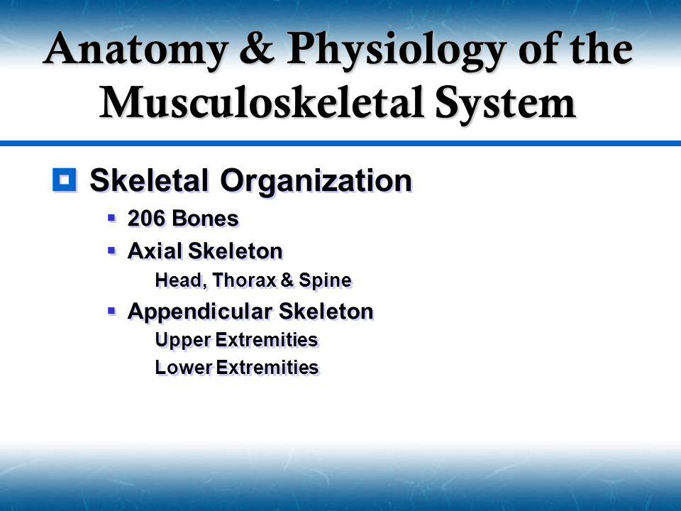  Skeletal Organization  206 Bones  Axial Skeleton  Head, Thorax & Spine  Appendicular Skeleton  Upper Extremities  Lower Extremities  Skeletal