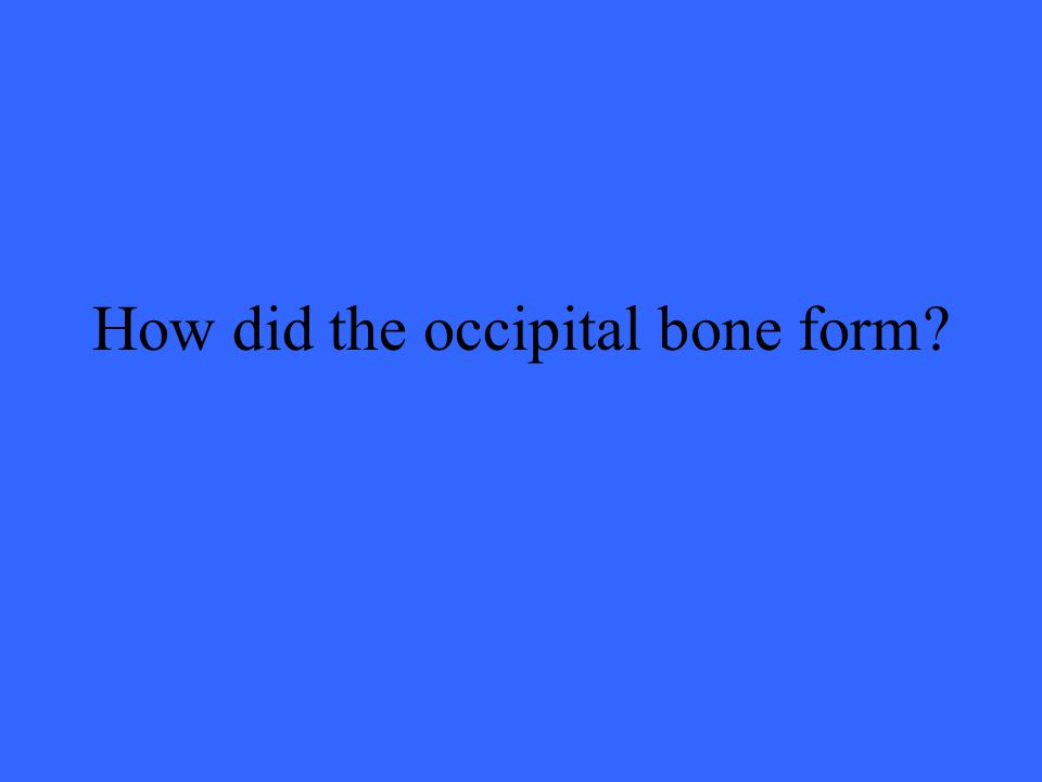 How did the occipital bone form