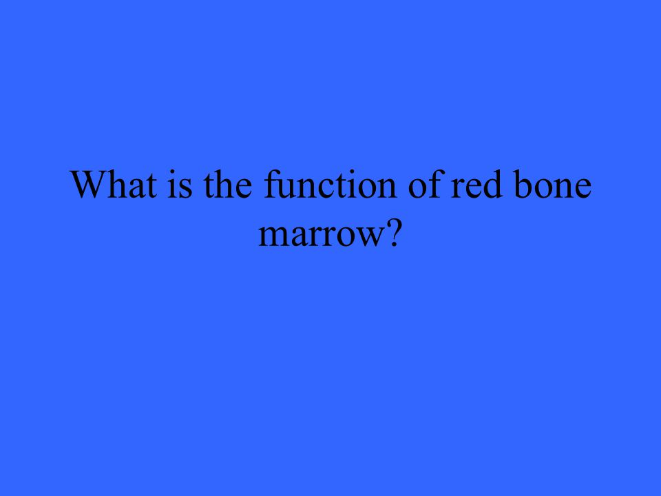 What is the function of red bone marrow?
