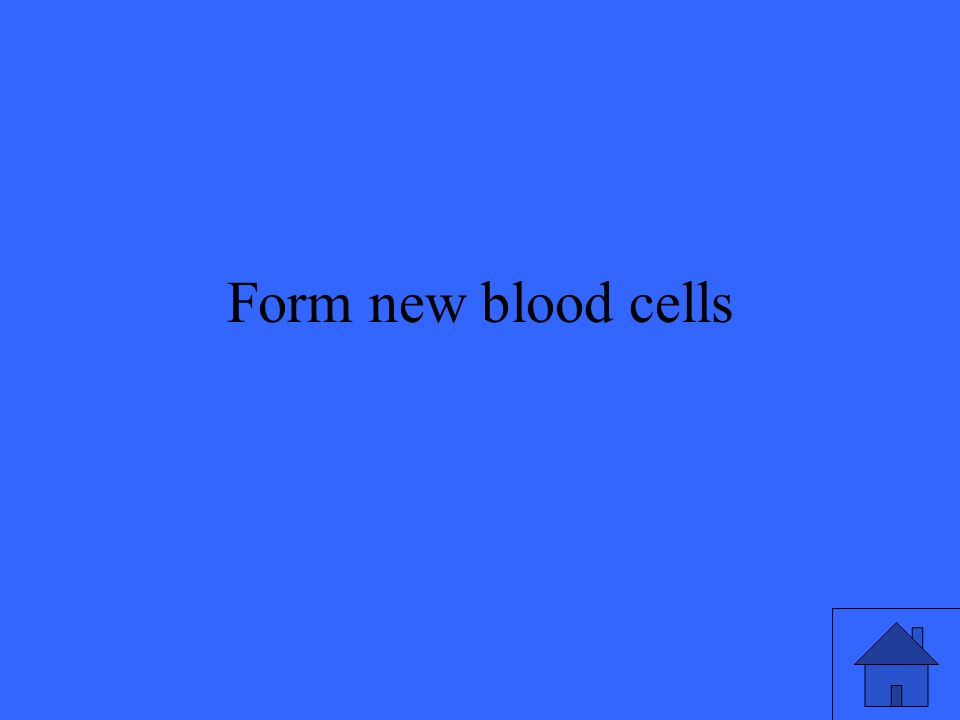 Form new blood cells