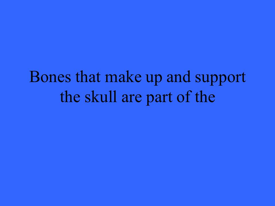 Bones that make up and support the skull are part of the
