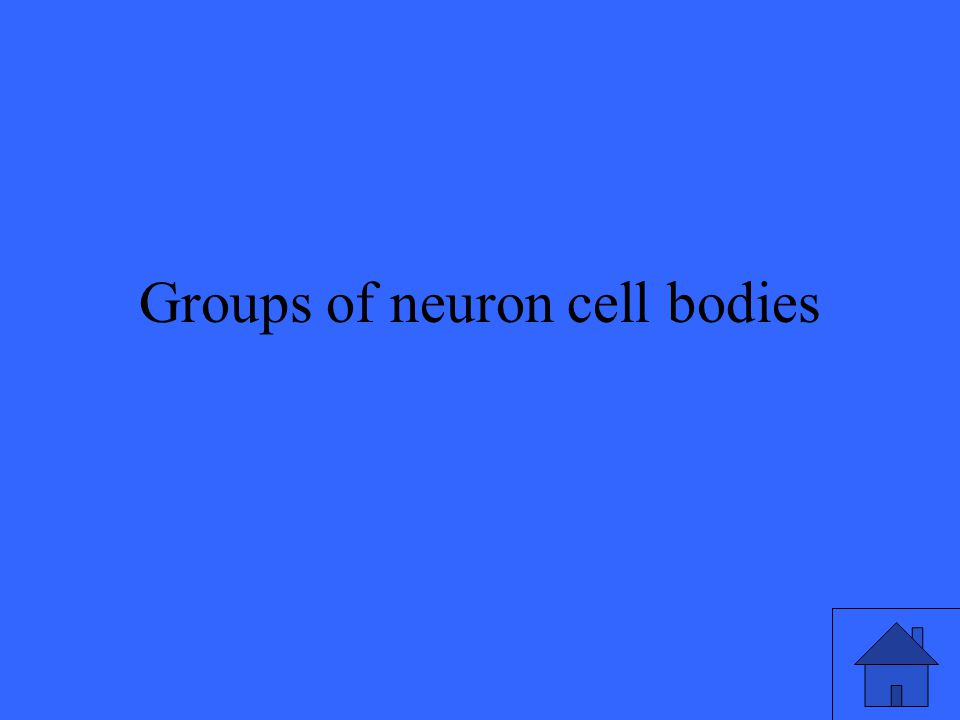 Groups of neuron cell bodies