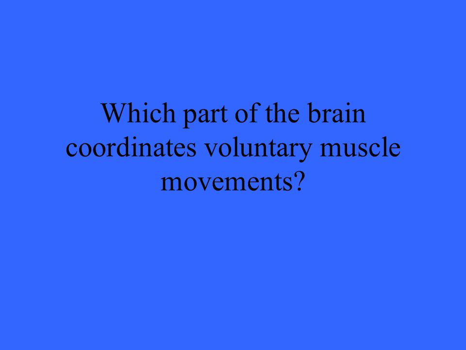 Which part of the brain coordinates voluntary muscle movements?