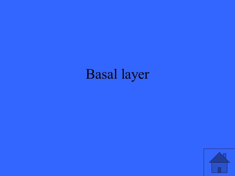 Basal layer