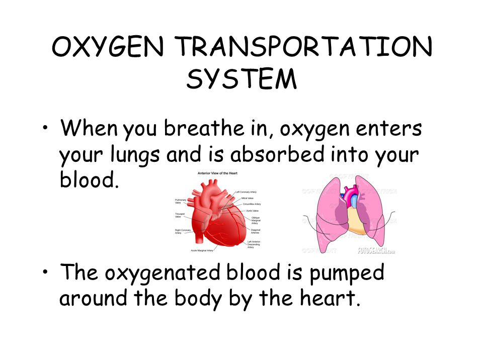 OXYGEN TRANSPORTATION SYSTEM When you breathe in, oxygen enters your lungs and is absorbed into your blood.