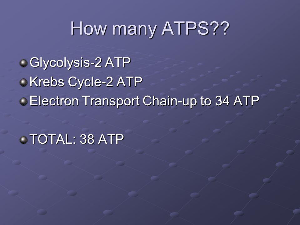 How many ATPS .