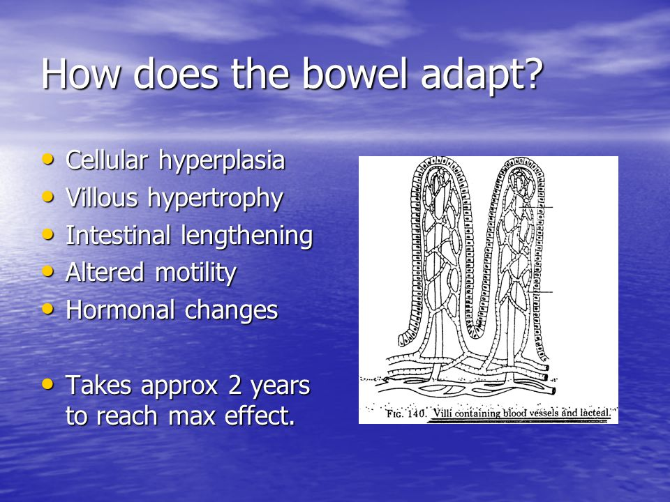 How does the bowel adapt.