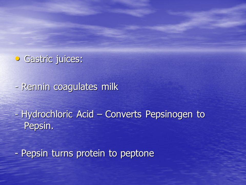 Gastric juices: Gastric juices: - Rennin coagulates milk - Hydrochloric Acid – Converts Pepsinogen to Pepsin. - Pepsin turns protein to peptone
