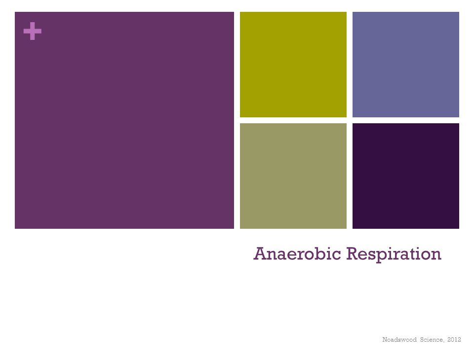 + Anaerobic Respiration Noadswood Science, 2012