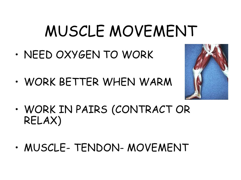 MUSCLE MOVEMENT NEED OXYGEN TO WORK WORK BETTER WHEN WARM WORK IN PAIRS (CONTRACT OR RELAX) MUSCLE- TENDON- MOVEMENT
