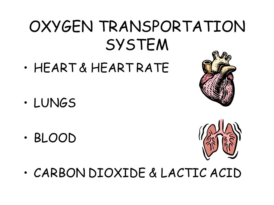 OXYGEN TRANSPORTATION SYSTEM HEART & HEART RATE LUNGS BLOOD CARBON DIOXIDE & LACTIC ACID