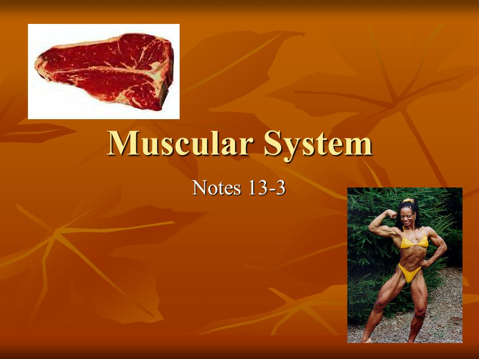 Muscular System has many functions: Movement Movement Body temperature Body temperature Posture Posture Food source Food source