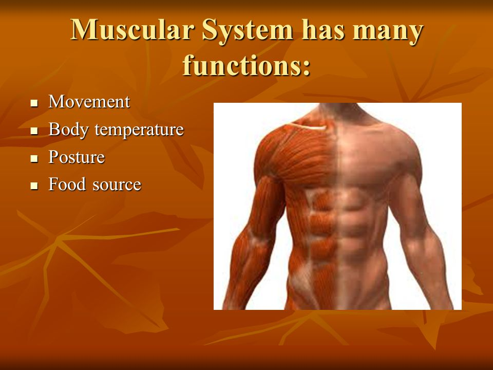 Function: Movement Work with skeletal system to move body Work with skeletal system to move body contract = shorten/tighten contract = shorten/tighten Muscles PULL bones, never push Muscles PULL bones, never push muscle cells are called muscle fibers muscle cells are called muscle fibers Often work in pairs/groups for one movement Often work in pairs/groups for one movement