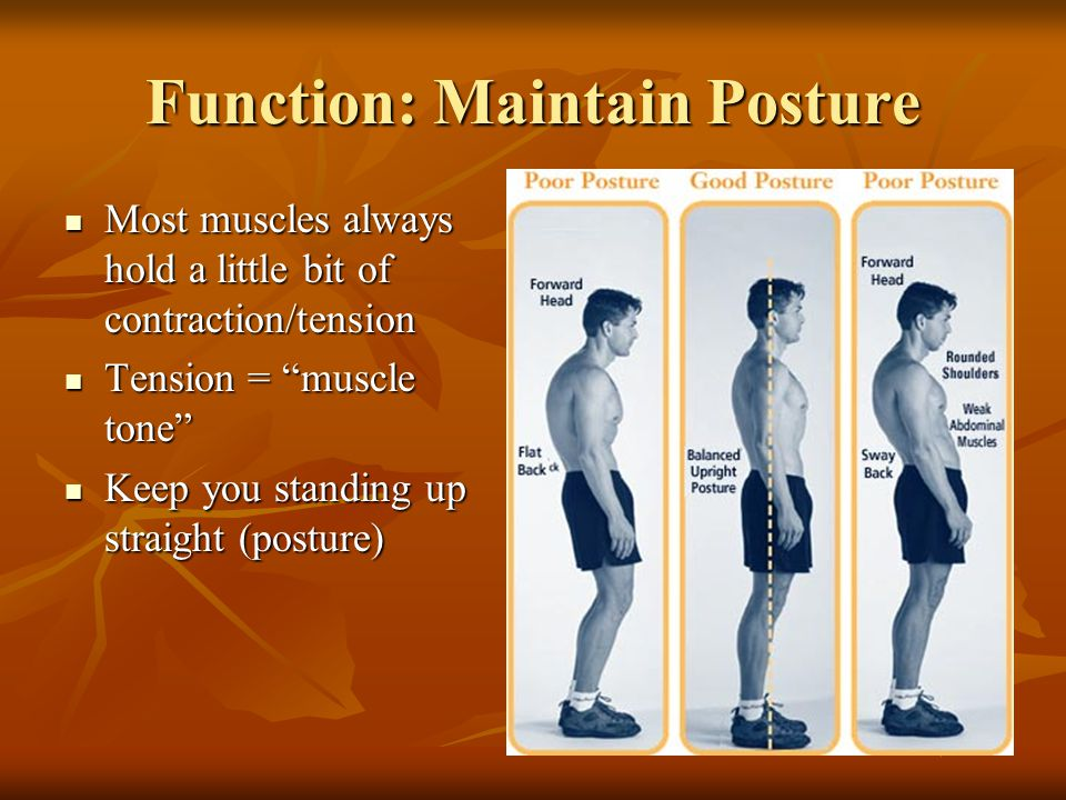 Function: Food Source Meat that you eat is muscle! Meat that you eat is muscle!