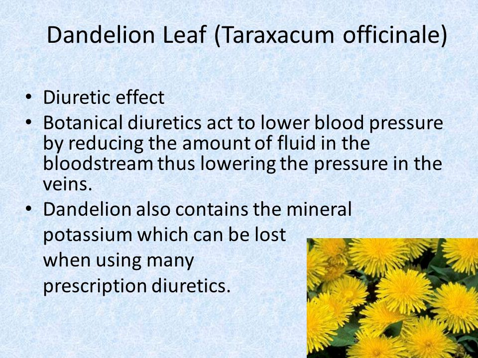 Dandelion Leaf (Taraxacum officinale) Diuretic effect Botanical diuretics act to lower blood pressure by reducing the amount of fluid in the bloodstre