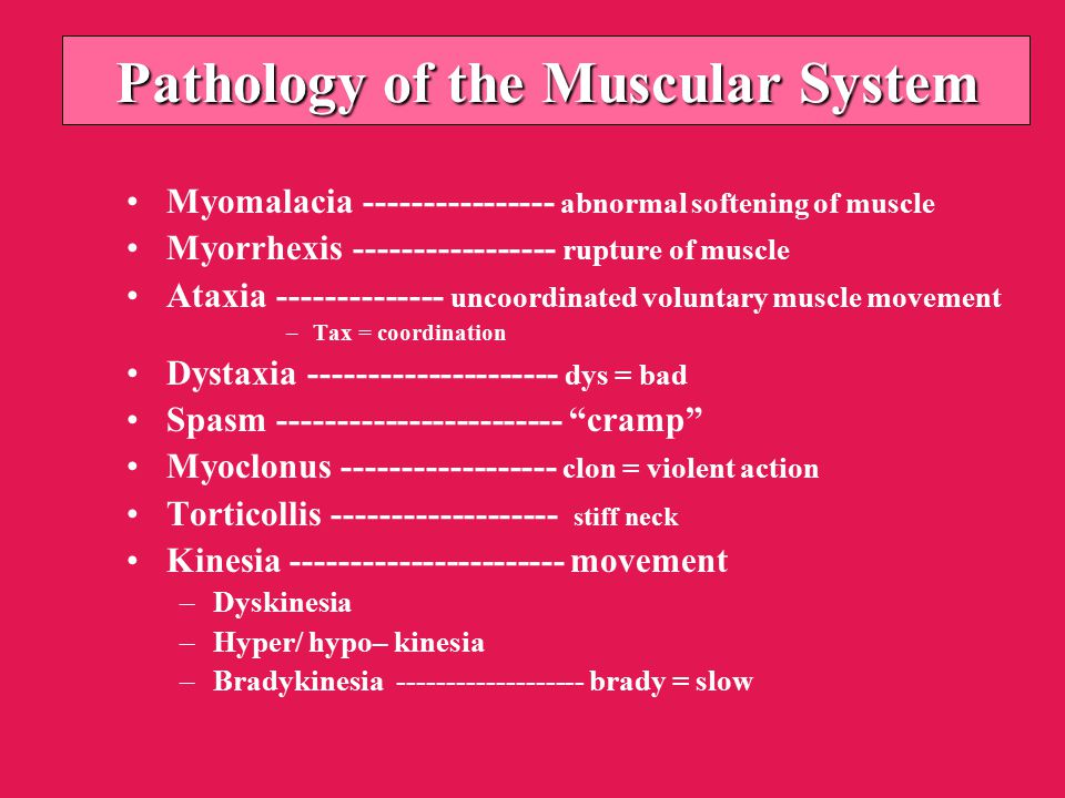 Pathology of the Muscular System Myomalacia ---------------- abnormal softening of muscle Myorrhexis ----------------- rupture of muscle Ataxia -------------- uncoordinated voluntary muscle movement –Tax = coordination Dystaxia --------------------- dys = bad Spasm ------------------------ cramp Myoclonus ------------------ clon = violent action Torticollis ------------------- stiff neck Kinesia ----------------------- movement –Dyskinesia –Hyper/ hypo– kinesia –Bradykinesia ------------------- brady = slow