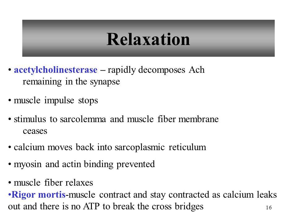 15 Cross-bridge Cycling myosin cross-bridge attaches to actin binding site myosin cross-bridge pulls thin filament ADP and phosphate released from myosin new ATP binds to myosin linkage between actin and myosin cross-bridge break ATP splits myosin cross-bridge goes back to original position