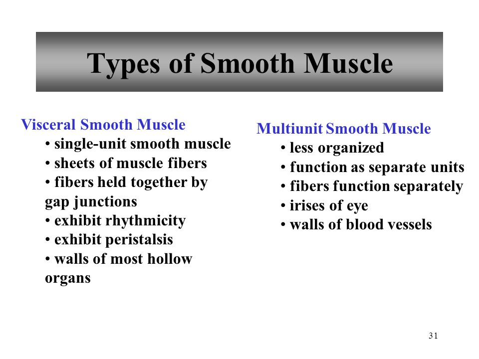 30 Smooth Muscle Fibers Compared to skeletal muscle fibers shorter single, centrally located nucleus elongated with tapering ends myofilaments randoml