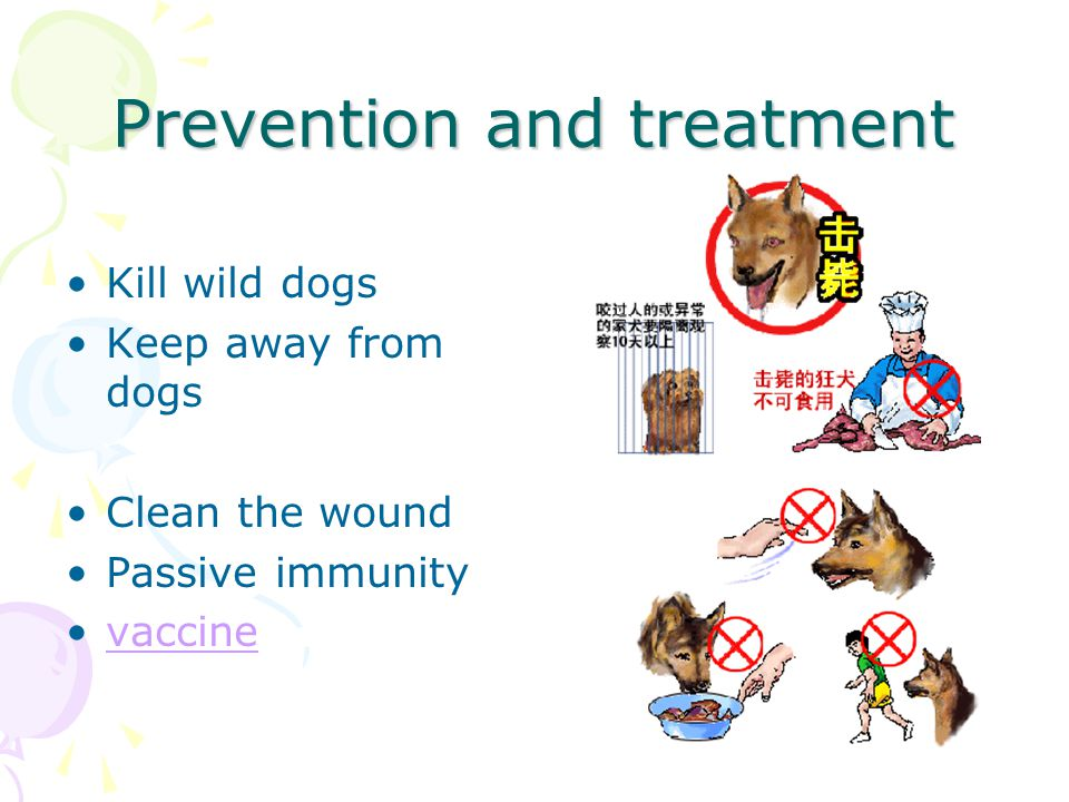 Prevention and treatment Kill wild dogs Keep away from dogs Clean the wound Passive immunity vaccine