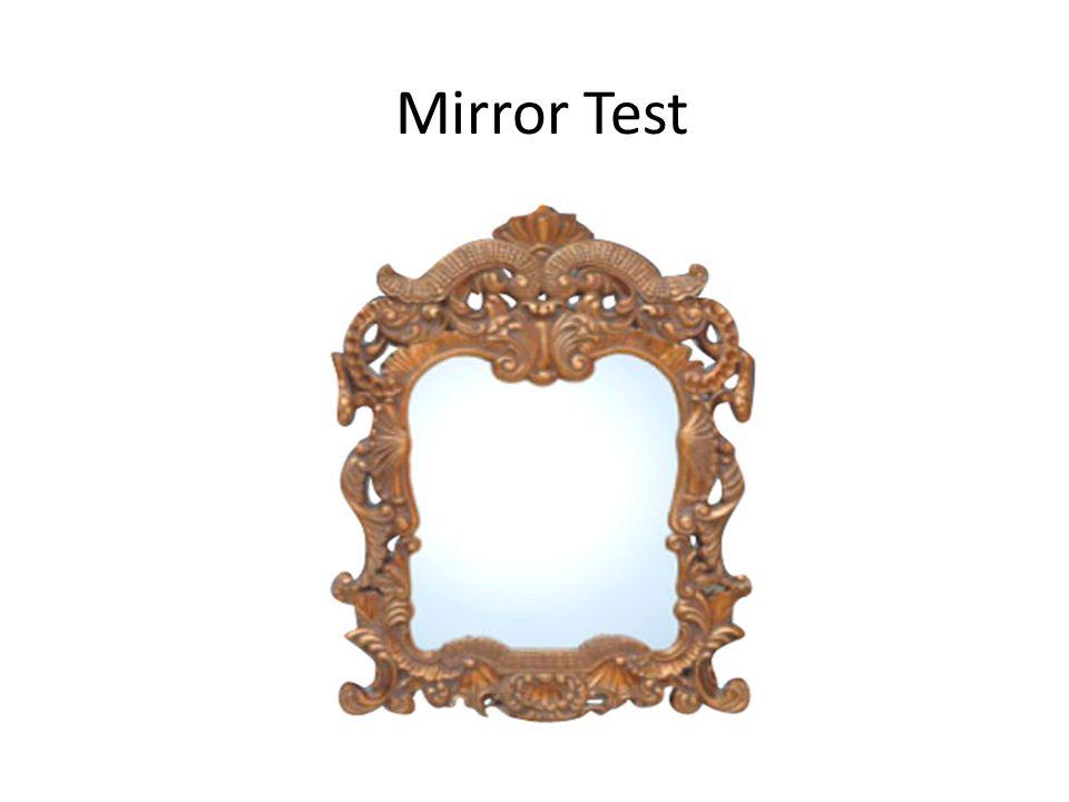 Mirror Test