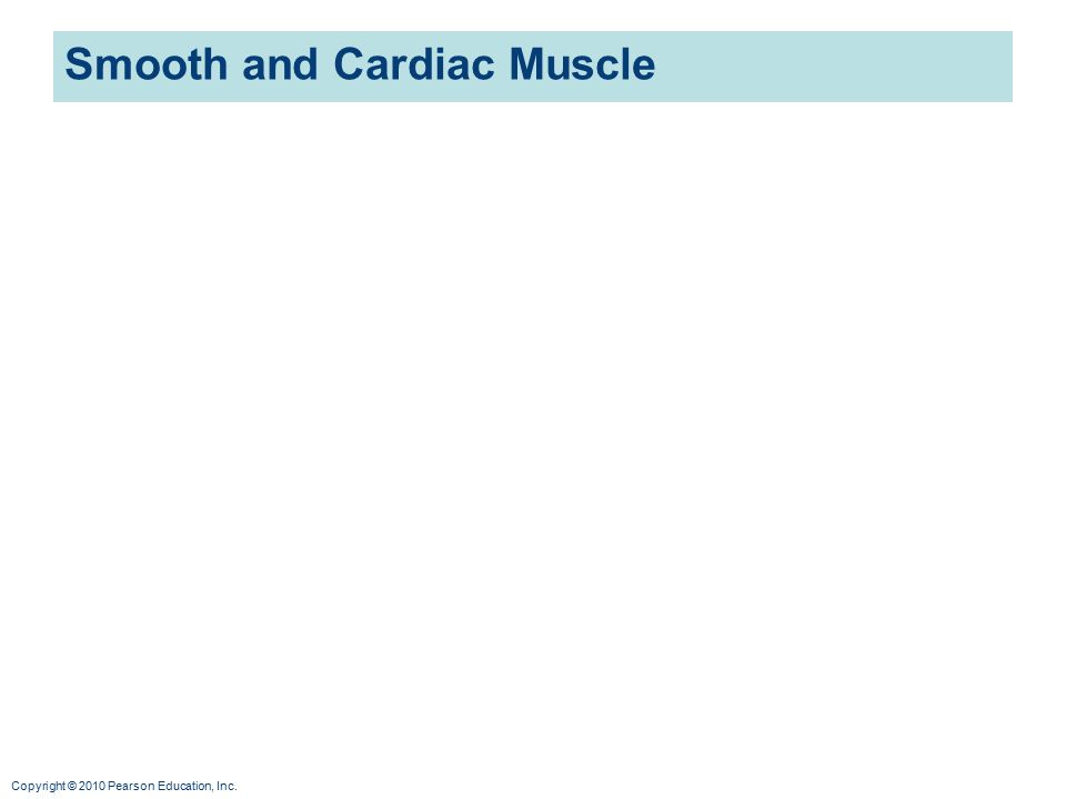 Copyright © 2010 Pearson Education, Inc. Smooth and Cardiac Muscle