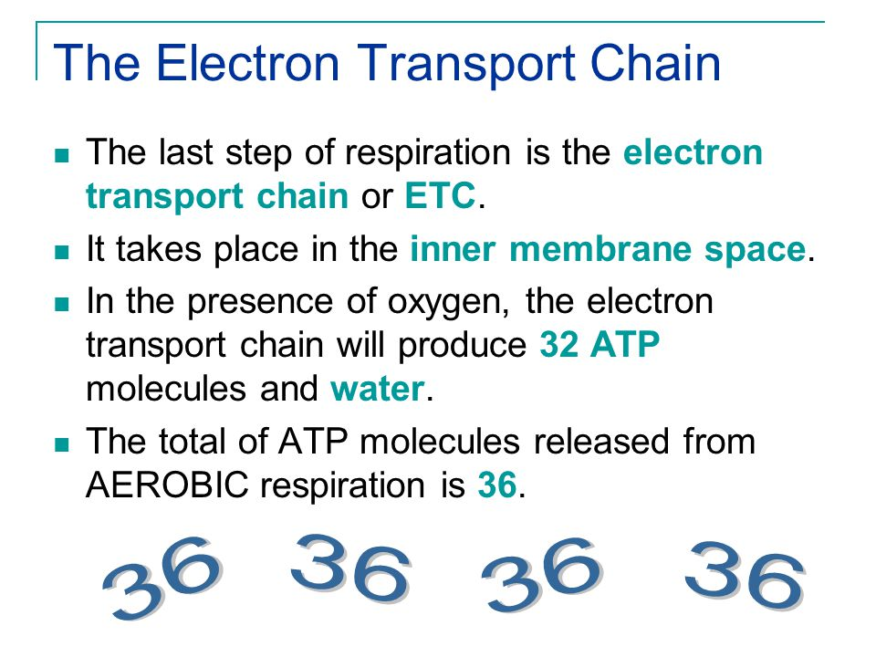 Electron Transport Chain Animation: http://www.science.smith.edu/departments/Biology/Bio231/etc.htmlhttp://www.science.smith.edu/departments/Biology/Bio231/etc.html http://vcell.ndsu.nodak.edu/animations/etc/movie.htm http://highered.mcgraw-hill.com/sites/0072437316/student_view0/chapter9/animations.html# Electron carriers NADH and FADH 2 release the Hydrogen ions across the membrane.