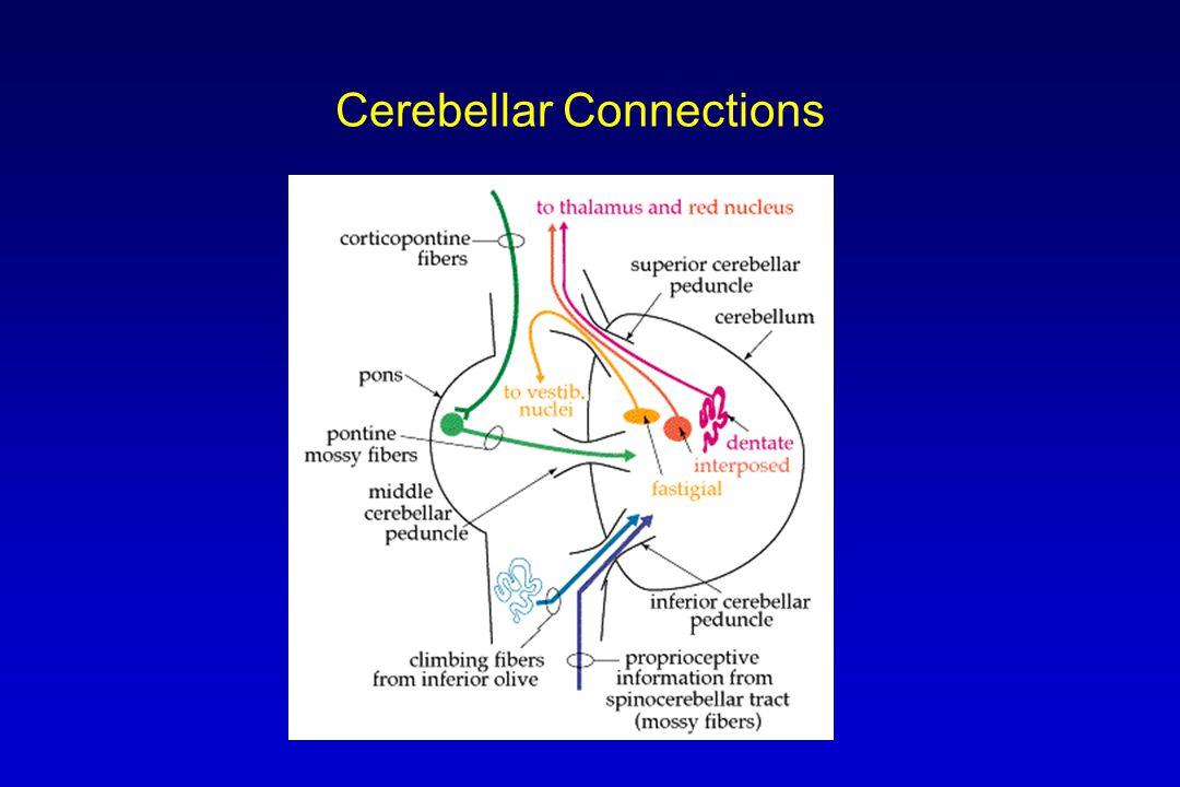 Cerebellar Connections