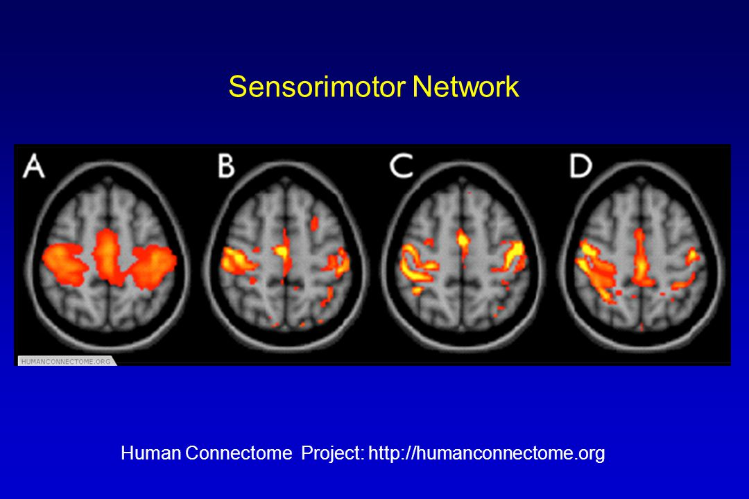 Sensorimotor Network Human Connectome Project: http://humanconnectome.org