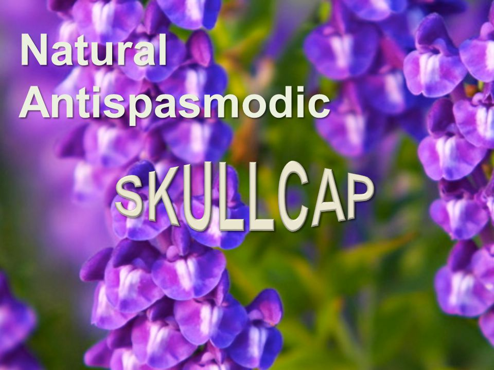 Skullcap (Scutellaria lateriflora) (also known as Virginia Skullcap) Used as a nerve tonic, sedative and nervous conditions.